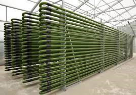 mass production of algae can also occur through photobioreactors